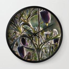 Pasque Flower Wall Clock