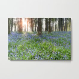 Bluebell Sunrise Metal Print