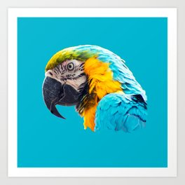 Macaw portrait on a turquoise background Art Print