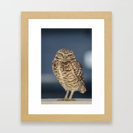 Burrowing Owl Framed Art Print