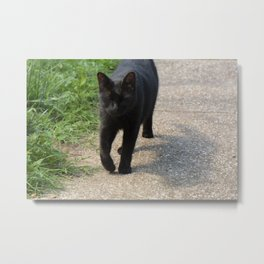 black cat strut Metal Print