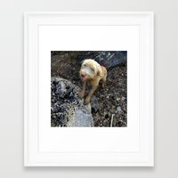 cheese Framed Art Prints featuring Cheese by aeolia