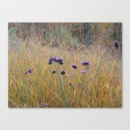Autumn Verbena Canvas Print
