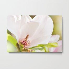 Magnolia sepal flowering macro Metal Print