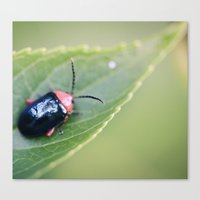 beetle Canvas Prints featuring Beetle by BURNEDINTOMYHE∆RT♥