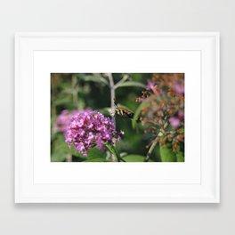 GMO BUG a cross between a moth  a hummingbird and a bee Framed Art Print
