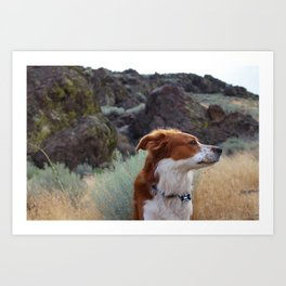 Day Dreaming Dog Art Print