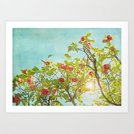 Pink Camellia japonica Blossoms and Sun in Blue Sky Art Print