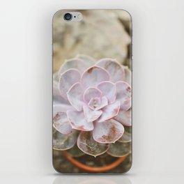 SOLO SUCCULENT  iPhone Skin