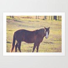 Chesnut Horse Art Print