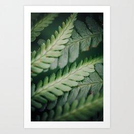 Fougère Art Print