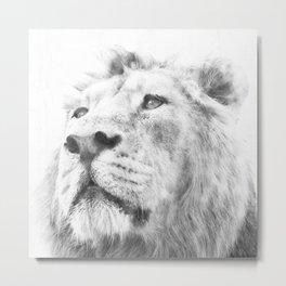 lion I Metal Print