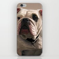 british iPhone & iPod Skins featuring British Bulldog by Mel Hampson