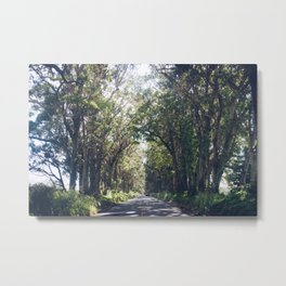Tunnel of Trees - Color - Kauai, Hawaii Metal Print