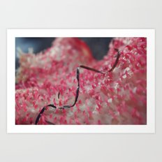 pink algae Art Print