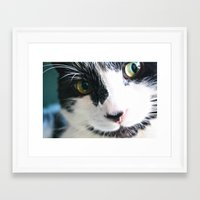 meow Framed Art Prints featuring Meow by Kakel-photography