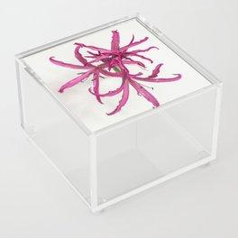Nerine Lily Flower Acrylic Box
