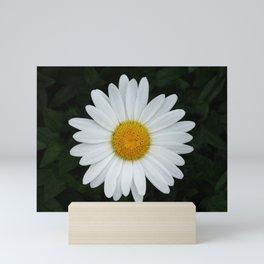 Shasta Daisy Mini Art Print