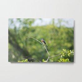 Longwood Gardens - Spring Series 240 Metal Print