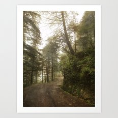 A foggy road in the forest, Dharamsala, India Art Print