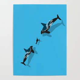 Killer whale hunting a seal Poster
