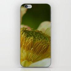It all revolves around iPhone & iPod Skin