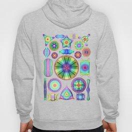 Ernst Haeckel Rainbow Diatoms Hoody