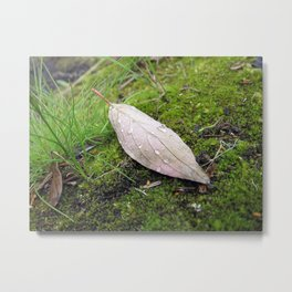 Morning Leaf Metal Print