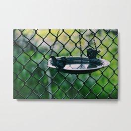 Bird feed plate Metal Print