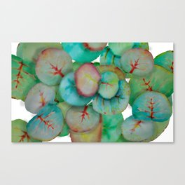 sea grape leaves Canvas Print