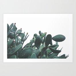 Fruit Cactus Desert Art Print