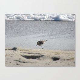 Hunchback of the Beach Canvas Print