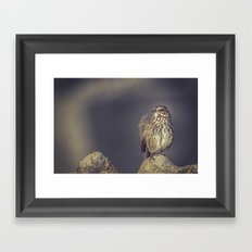 Song Sparrow Framed Art Print