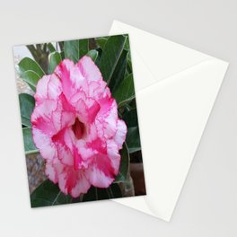 OH! SO SWEET... Stationery Cards