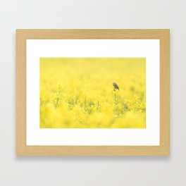 Bergeronnette printanière dans un champs Framed Art Print