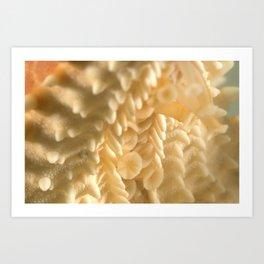 Starfish, (Sea Star)  Art Print
