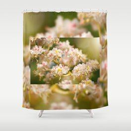 Aesculus chestnut tree blossoms Shower Curtain