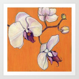 Orchid on Orange Art Print