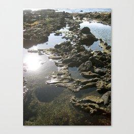 Laguna Tidepools Canvas Print