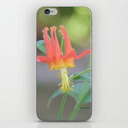 Pastel Columbine Afternoon iPhone Skin