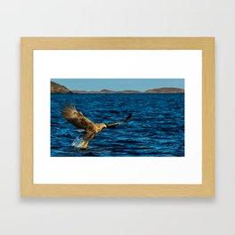 The White Tailed Eagle Framed Art Print