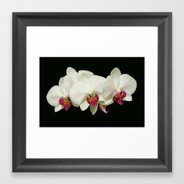 white pink orchid Framed Art Print