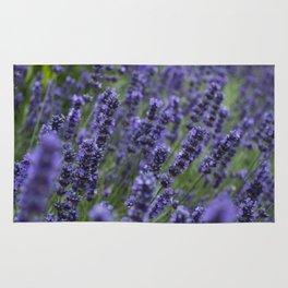 Lavender field Rug