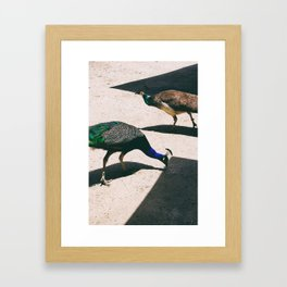 Peacocks Framed Art Print