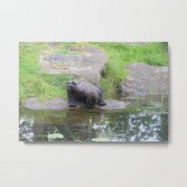 Gorilla Drinking Water Metal Print