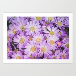 Purple daises Art Print