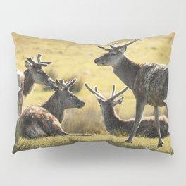 Reindeers of Scotland Pillow Sham