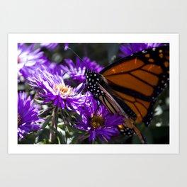 Monarch Butterfly 5 Art Print