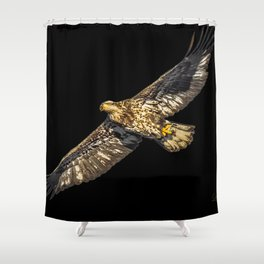 Another Immature Bald Eagle Shower Curtain