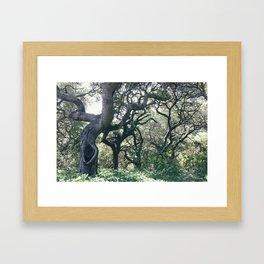 Oak Groves Framed Art Print